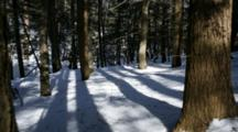 Time Lapse Forest Shadows On Snow