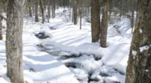 Timelapse Shadows In The Forest, Trees, Snow