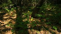 Time Lapse Slipper Orchids And Shadows In Forest