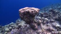 Rotate Around Oddly Shaped Porites Hard Coral, Meemu Atoll, The Maldives