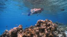 Woman Snorkelling In Clear, Blue Waters, Over Reef, Vaavu Atoll, The Maldives