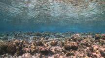 Dead Coral Reef In The Shallows, Vaavu Atoll, The Maldives