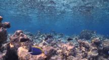 Coral Framing Blue Water And Reef Fish, Vaavu Atoll, The Maldives
