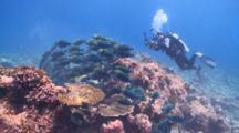 Diver Photographing School Of Greenthroat Parrotfish, Maamigili, South Ari Atoll, The Maldives