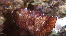 Nudibranch Crawling Through Shot