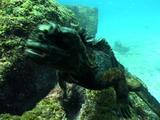 Iguana Moving To Camera And Hits Lens, Galapagos Islands