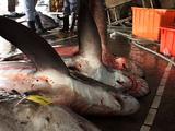 Dead Sharks At Fish Market
