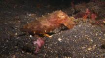 Cuttlefish Slinking Away