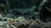 Yellow Stingray Swimming Along Bottom