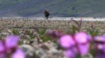 Arctic Plants Stock Footage