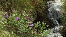Flowers And Stream In Auyuittuq National Park, Baffin Island