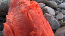 Filleted Arctic Char, Coronation Fiord, Auyuittuq National Park, Baffin Island