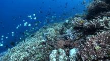 Track Over Coral Reef With School Of Fish