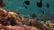 Green Sea Turtle Swims On Colorful Coral Reef