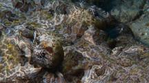 Crocodile Fish Close Up Eyes