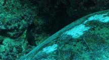 Green Turtle  At Cleaning Station