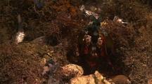 Mantis Preens
