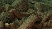 Sea Horse Cryptic Camouflage