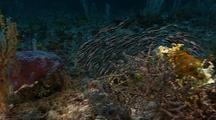 Venomous Catfish Swarm Reef
