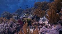 Coral Reef Near Surface, Looking Up At Reflection
