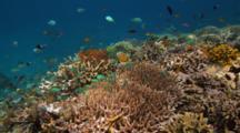 Shallow Reef Bunaken Marine Park