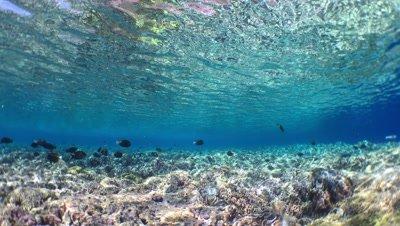 Underwater Coral Reef Video Decor Lock Shot