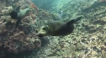 Sea Lion Acrobatics