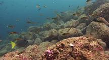 Reef And Tropical Fish