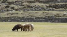 Cuzco Cusco Peru Saqsayhuaman Temple Outside Of The City With Llamas Grazing South America
