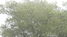 Rain On Toyon In The Chaparral During Its Rainy Season. Santa Monica Mountains, CA.