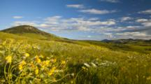 Time Lapse Of Wildflowers Blowing In The Breeze In The Bears Paw Mountains Near Havre, Montana, USA