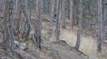 Clay Morrison Mountain Bikes The Whitefish Trail In Late Autumn In Whitefish, Montana, USA