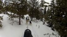 Dog Sledding At Dog Sled Adventures Montana In Olney, Montana, USA. (MR)