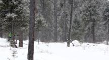 Skate Cross Country Ski Action At Stillwater Nordic Center Near Whitefish, Montana, USA. (MR)