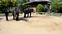 Thailand, Island Of Ko Samui (Aka Koh Samui). Island Safari Elephant Camp, Baby Elephant Show. Elephants Playing With Hula-Hoop. (UR)
