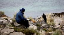 Carcass Island, Falkland Islands. A Woman Sketches A Striated Caracara.