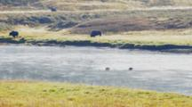 Bison Crossing The Yellowstone River In The Hayden Valley Of Yellowstone National Park In Wyoming