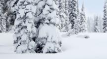 WA, Mount Rainier National Park, Snow Shoeing In Untracked Snow (Still Image Pan)
