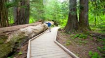 WA, Mount Rainier National Park, Grove Of The Patriarchs Trail Through Old Growth Forest With Western Red Cedars (MR) (Still Image Zoom)