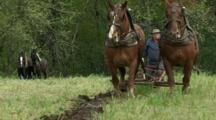 USA, Oregon, Champoeg State Park, Belgian Team Plowing In Plowing Competition, MR