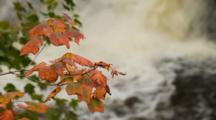 Cascade River, Cascade River State Park, Minnesota, Red Maple Fall Color