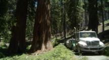 Visitors Ride Tram Through Mariposa Grove