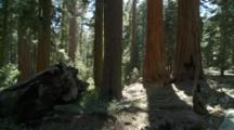 Upper Mariposa Grove