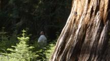 Visitors Take In The Grandeur Of The Giant Sequoias