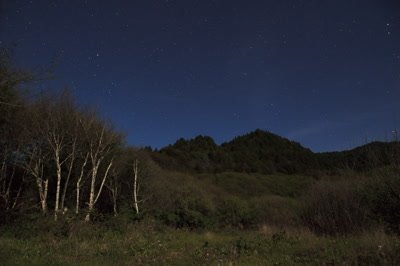 Star timelapse of forest and mountains under moonlight 5K