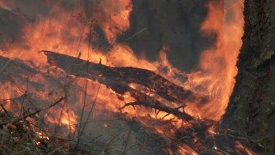 Wildfire burns ground fuels