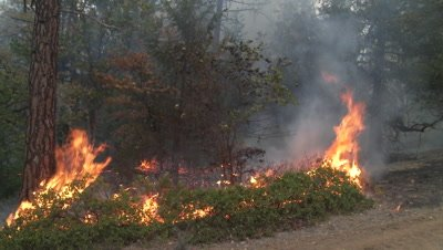 Wildfire burns a manzanita shrub