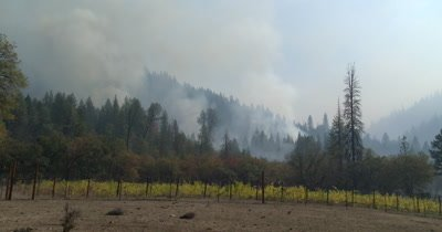Wildland fire burns around a vineyard with slow zoom-in