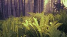 Ferns And Grasses In Fog