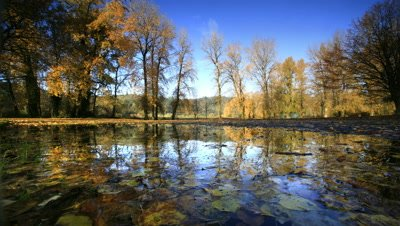 Pond reflecting trees with Autumn color,Oregon